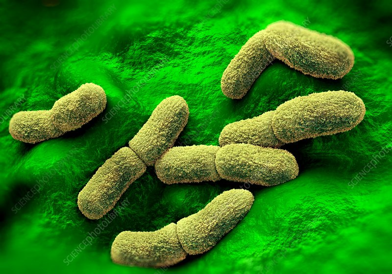 an overview of the yersinia pestis or the black death The black death - manifestations of the epidemic the black death had three manifestations -- bubonic plague, pneumonic plague, and septicaemic plague the bubonic plague had a thirty to seventy-five percent mortality rate.
