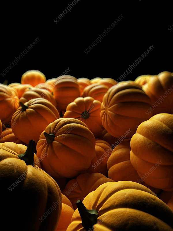 Pumpkins, Illustration