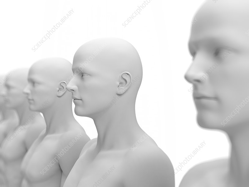 Human models in a row, Illustration