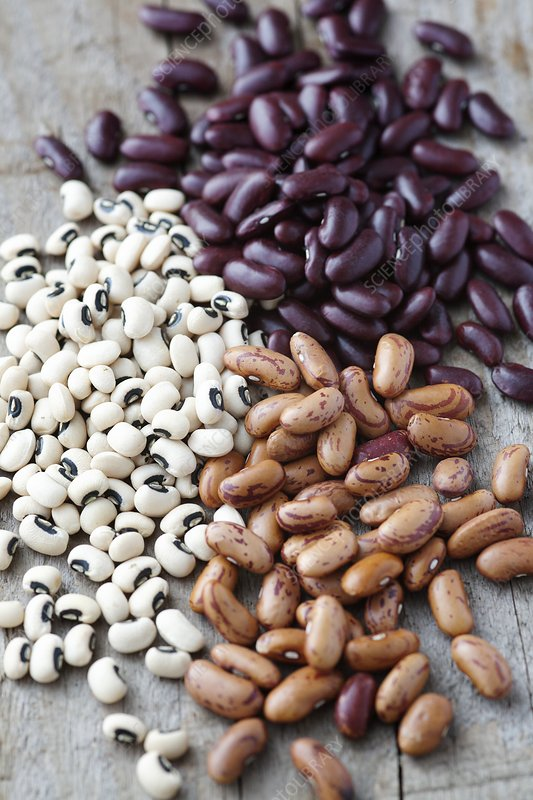 Selection of dried beans