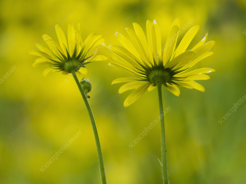 Wild flowers with yellow petals