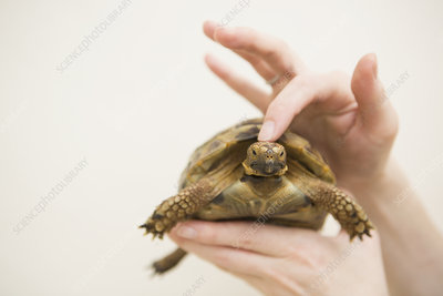 person's hand holding a tortoise