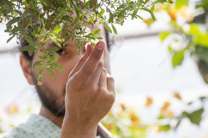 A man looking closely at plants