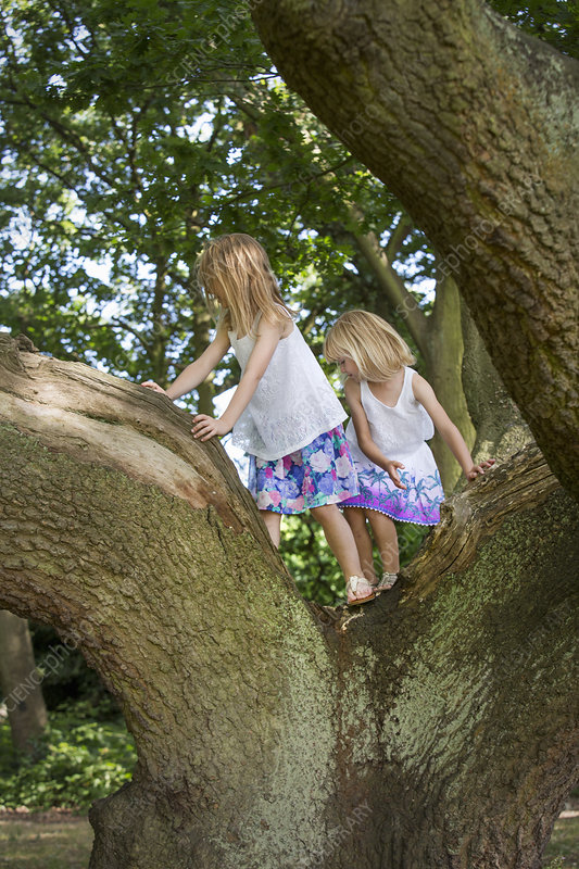 Two girls climbing a tree in a forest
