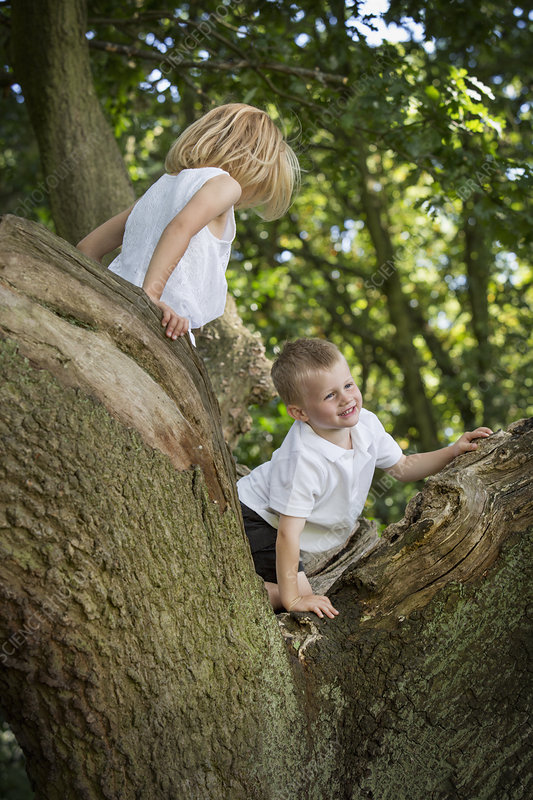 Young boy and girl climbing a tree