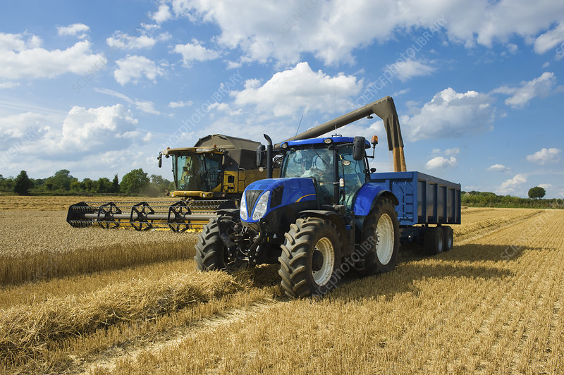 Combine harvester delivering grain