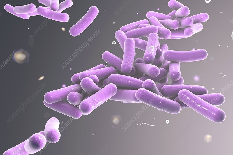 Rod-shaped bacteria, illustration