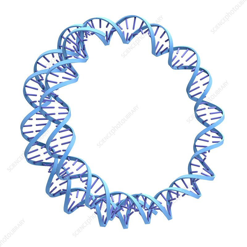Circular DNA molecule, artwork