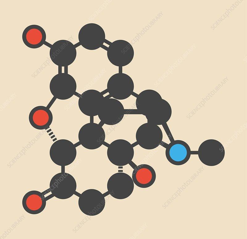 Oxymorphone opioid molecule