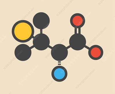 Penicillamine drug molecule