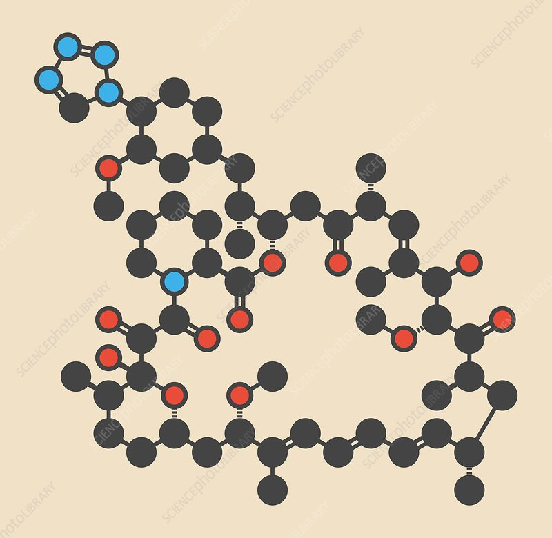Zotarolimus immunosuppressant molecule