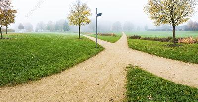 Footpaths crossing in park