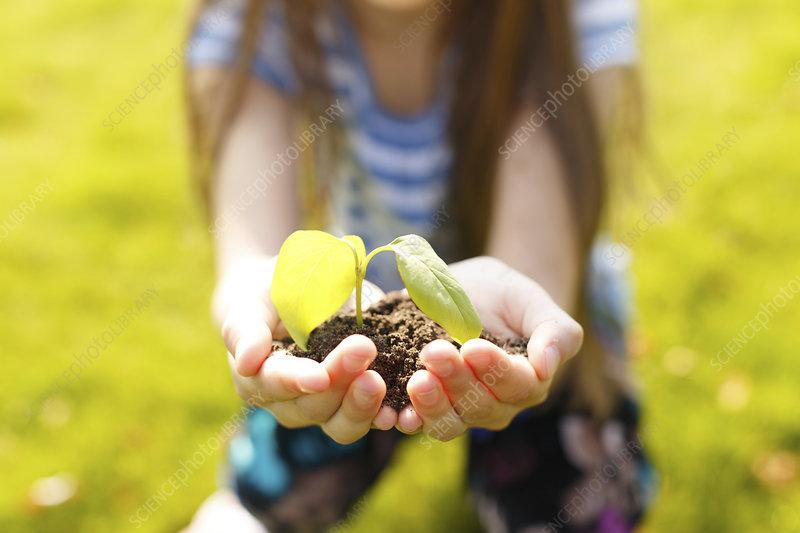 Girl holding a seedling