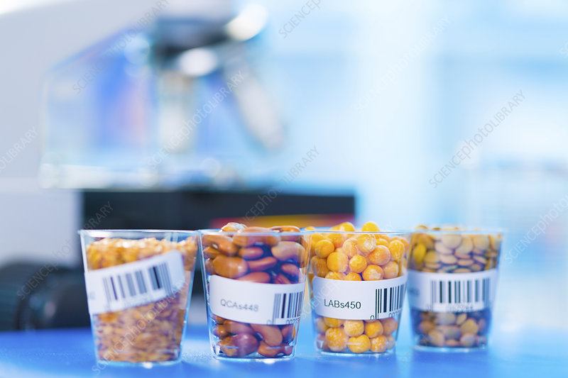 Grains and legumes in lab