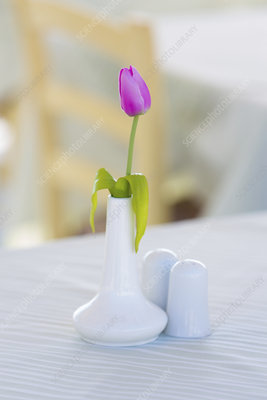 Pink tulip in white vase