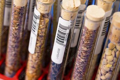 Food samples in test tubes