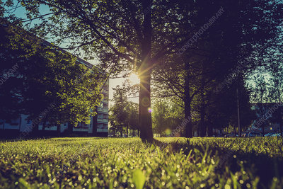Grass and trees in sunlight