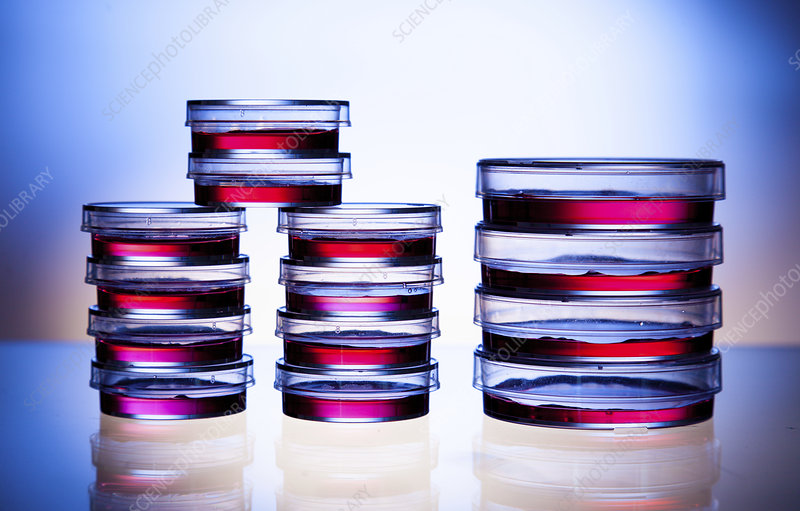 Petri dishes