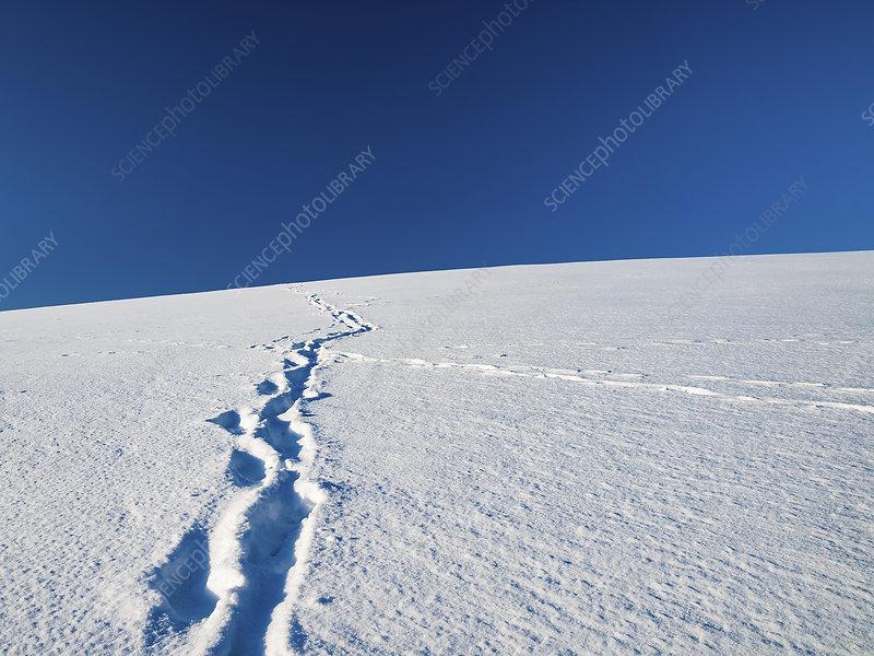 Tracks in snow