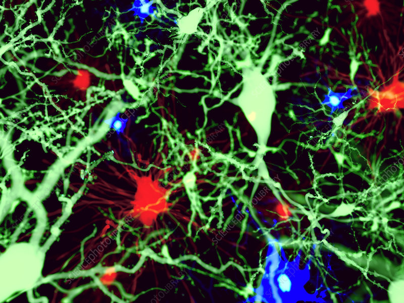 Brain cells, illustration