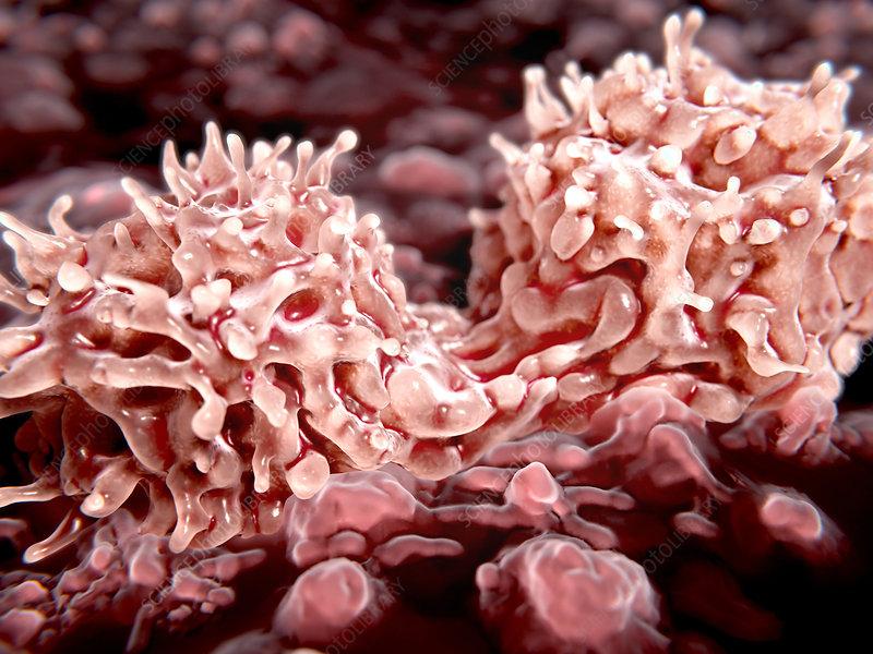 Dividing stem cells, illustration