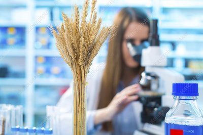 Female nutritionist using microscope