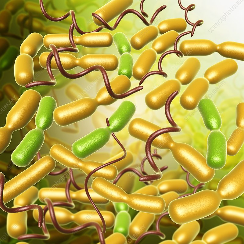 Yersinia pestis bacteria, illustration