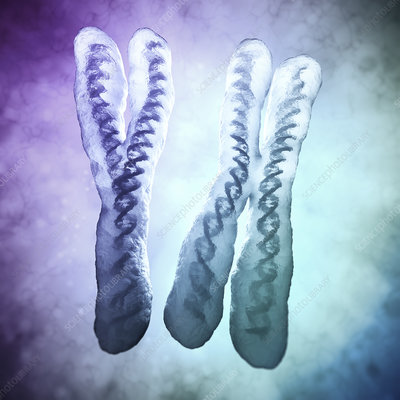 Human chromosomes, illustration