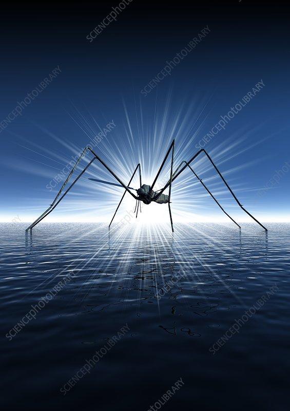 Mosquito, illustration