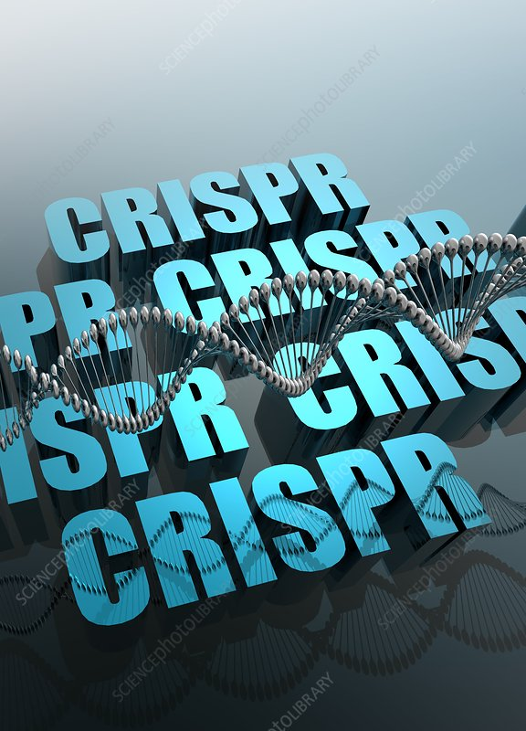 CRISPR gene editing, illustration