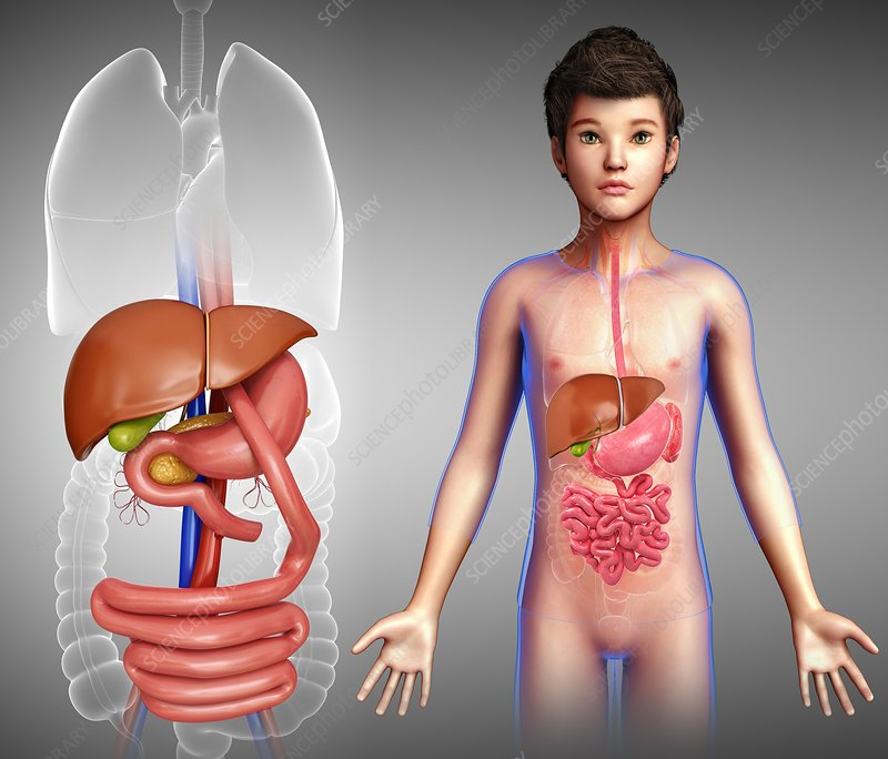 Gastric bypass in a child, illustration