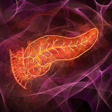 Human pancreas, illustration