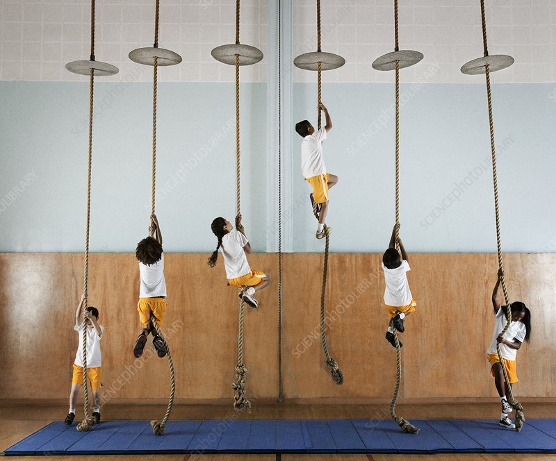 children in a gym climbing ropes