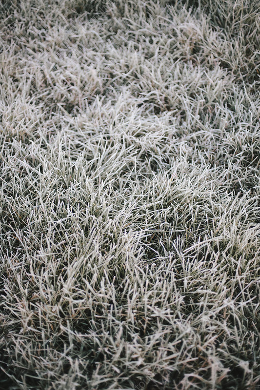 Early morning chill and frost on grass