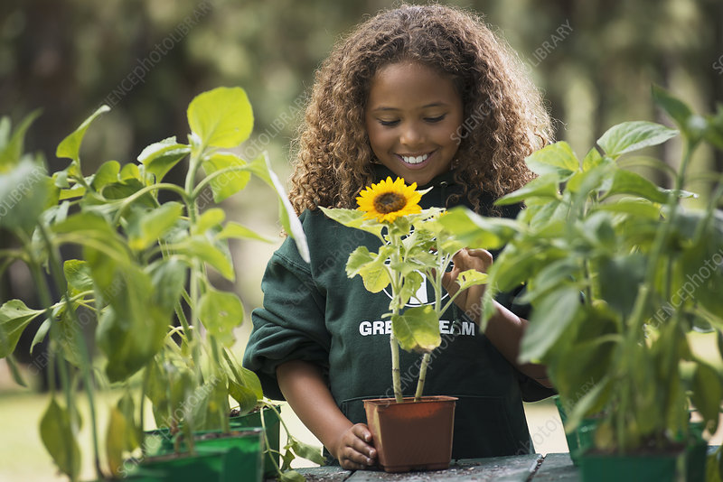 A girl examining a sunflower plant