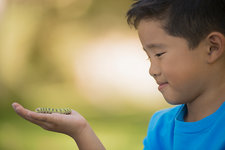 A boy holding a lizard on his hand
