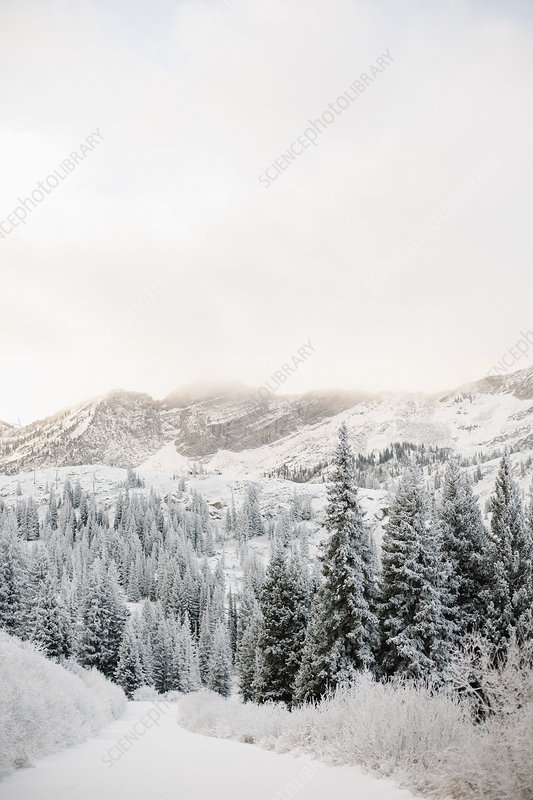 The mountains in winter in mist and snow