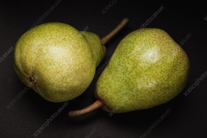Close up of two green pears