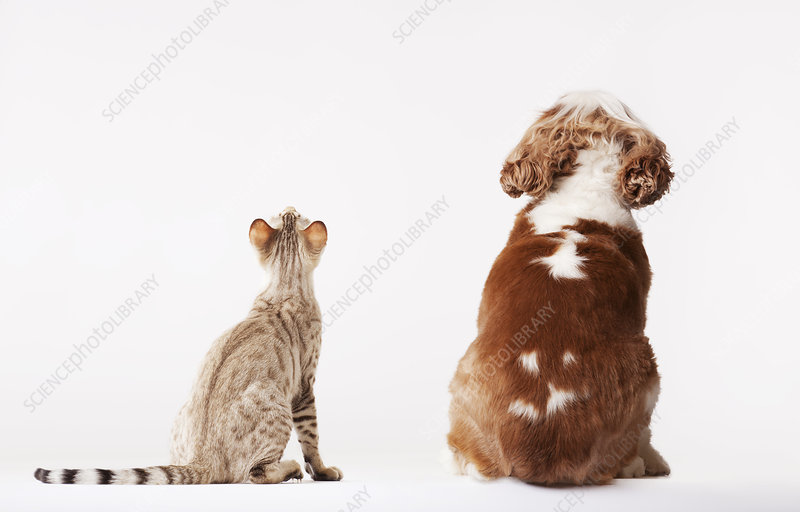 Dog and cat looking up together
