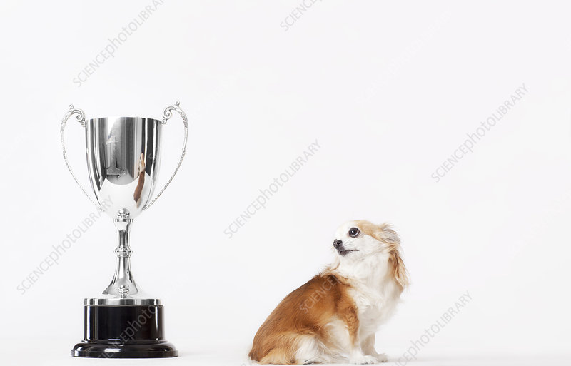 Dog looking at trophy