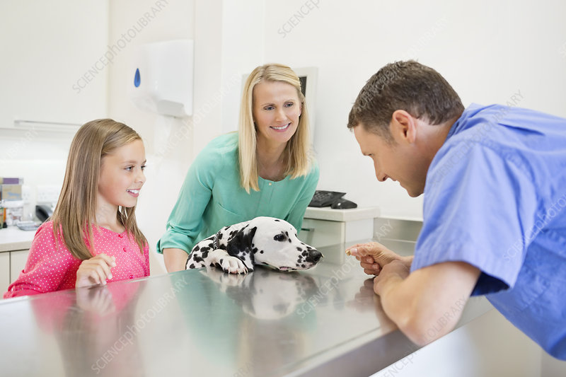 Veterinarian and owners examining dog