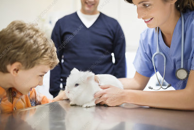 Veterinarian and owner examining rabbit