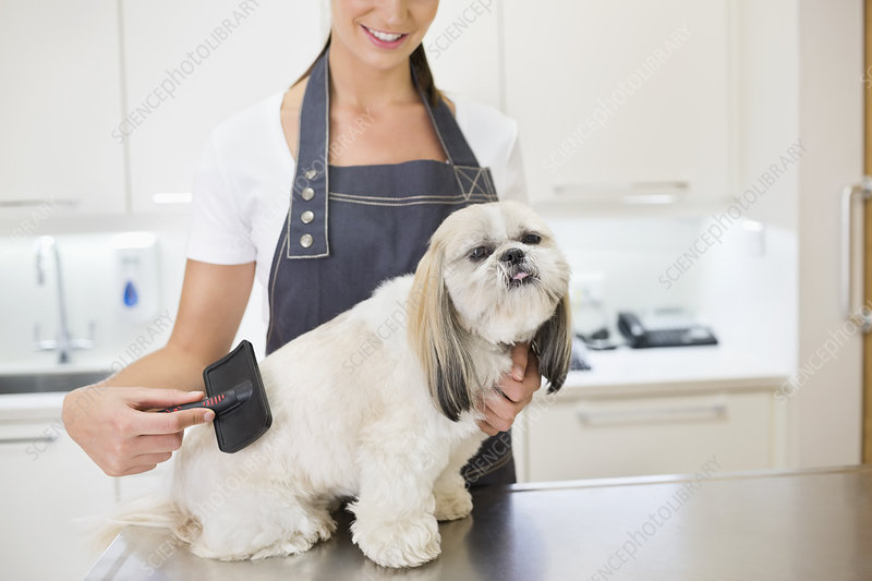 Groomer working on dog in office