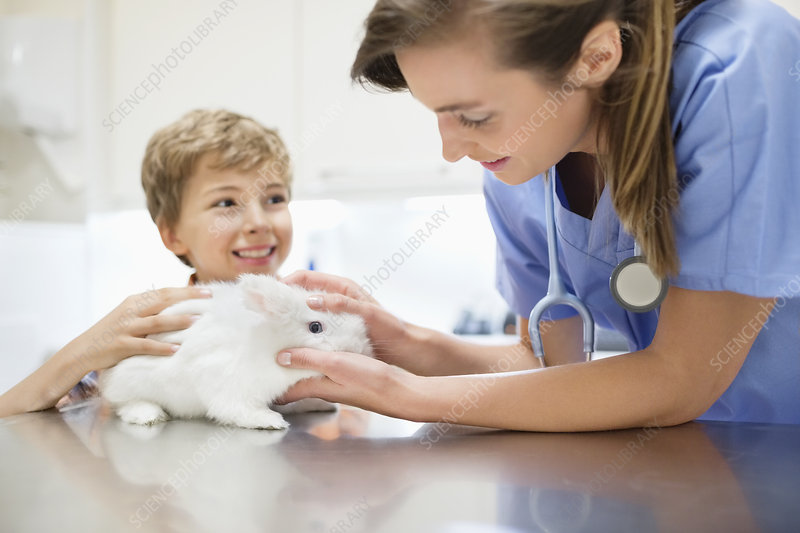 Vet examining rabbit with boy