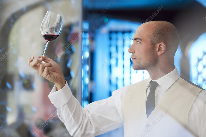 Waiter examining glass of wine