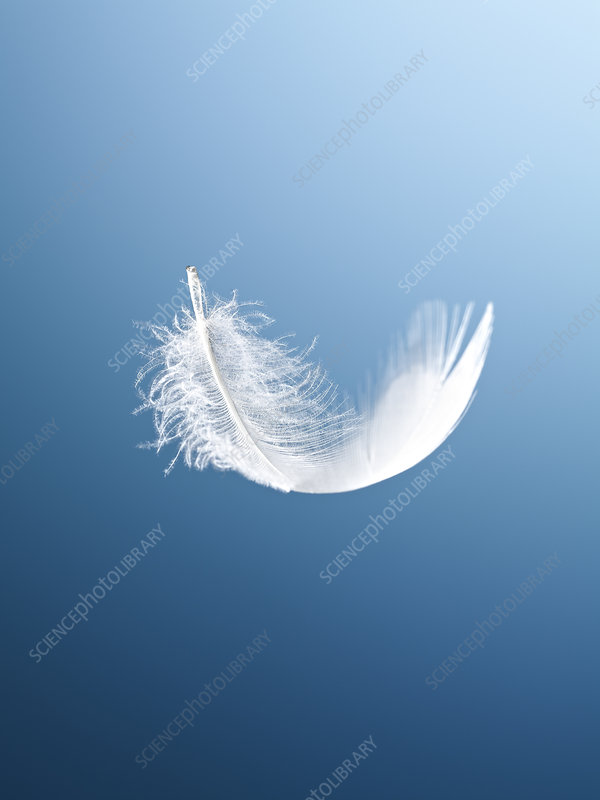 Feather floating on blue background