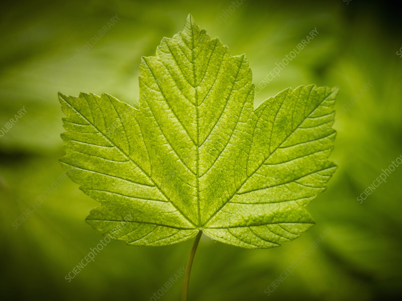 Close up of green leaf