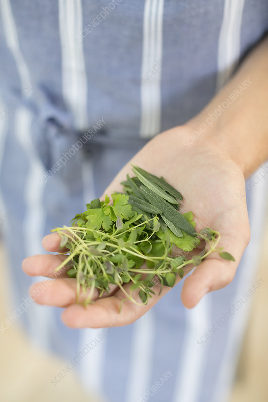 Woman holding handful of herbs