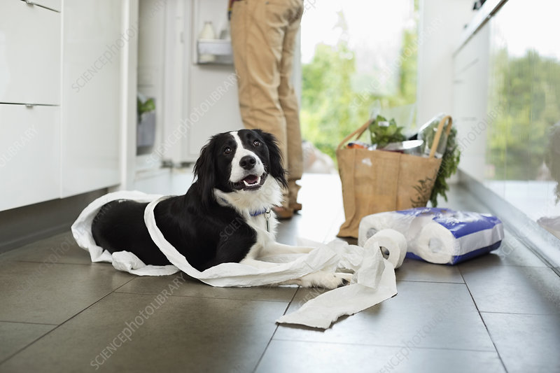 Dog unrolling toilet paper on floor
