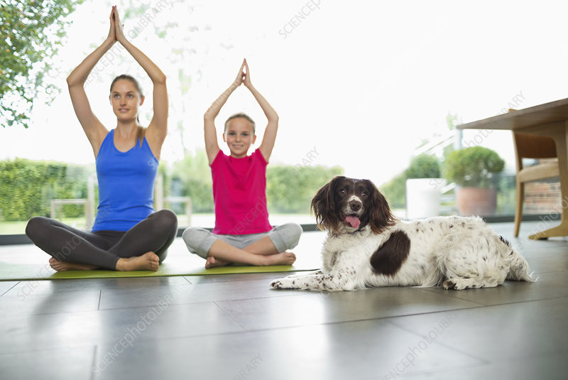 Dog sitting with women practicing yoga